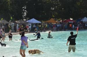 doggie pool day